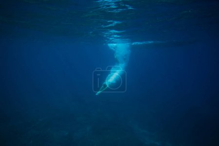 Photo for Partial view of man diving into ocean - Royalty Free Image