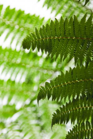 Photo for Close-up shot of beautiful fern leaves on light natural background - Royalty Free Image