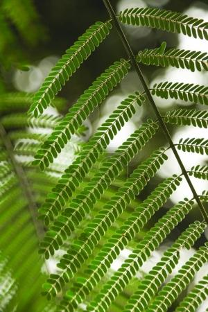 Photo for Close-up shot of beautiful fern leaves for background - Royalty Free Image