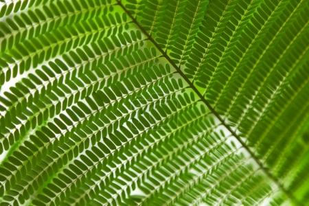 Photo for Beautiful green fern branch as background - Royalty Free Image