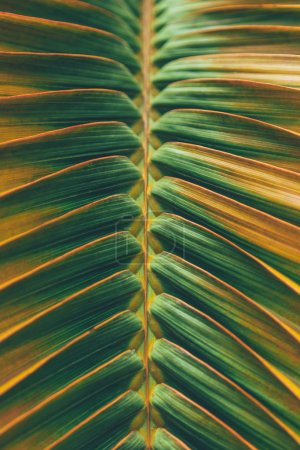 Photo for Close-up shot of beautiful palm leaf in orange light as background - Royalty Free Image