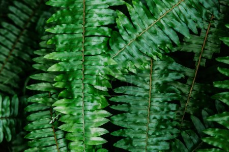 close-up shot of fern leaves for background