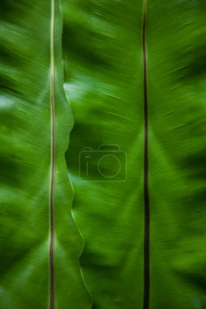 Photo for Close-up shot of banana leaves as background - Royalty Free Image