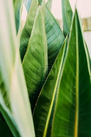 close-up shot of green tropical leaves