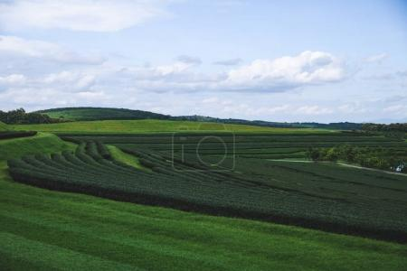 aerial view of green tea plantation on sunny day
