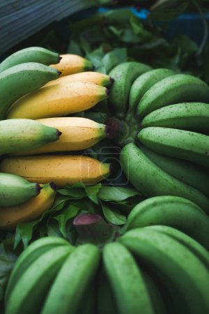 Photo for Close-up shot of pile of green and yellow bananas branches selling on market - Royalty Free Image