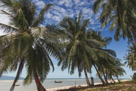 beautiful palm trees growing on seashore with fishermen boats floating in water on background