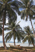 palm trees at tropical seashore with boat standing on ground