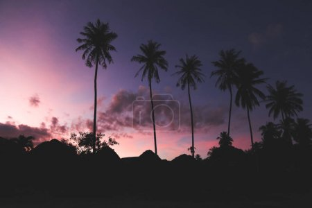 silhouettes of palm trees with dark purple sky on background