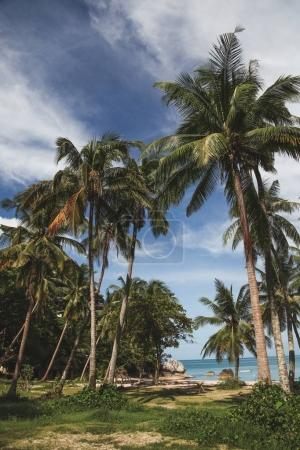 palm trees on tropical coast with ocean on background