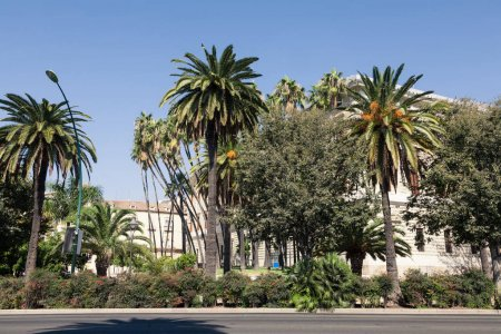 view of spanish street with palms and buildings under blue sky