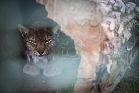 luchs im zoo 12 monate in