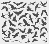 Seamless pattern with silhouettes of flying birds isolated on white background vector illustration