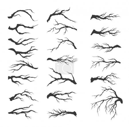 Vector set dry tree branches on white background...