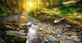 Sunset in forest with rocky river stream