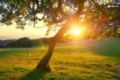 Silhouette of tree at summer sunset