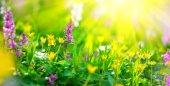 Colorful spring wildflowers in sunbeams