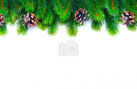 Christmas tree with cones branches isolated on white