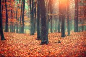 Autumn red forest in sunny day