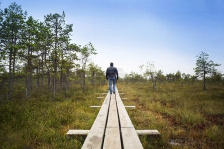 Big swamp wetlands Kemeri national park, Latvia. T...