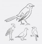 Bird animal line art drawing