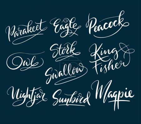 Illustration pour Aigle et oiseau de paon typographie écrite à la main. Bon usage pour le logotype, le symbole, l'étiquette de couverture, le produit, la marque, le titre de l'affiche ou toute conception graphique que vous voulez. Facile à utiliser ou changer de couleur - image libre de droit