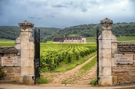 Schloss mit Weinbergen, Burgund, Frankreich
