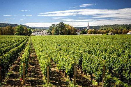 Bourgogne - MEURSAULT - Château de Meursault. Aujourd'hui, le château est l'un des vignobles les plus importants que vous pouvez découvrir le long de la route des vins de Bourgogne. Montrachet, France