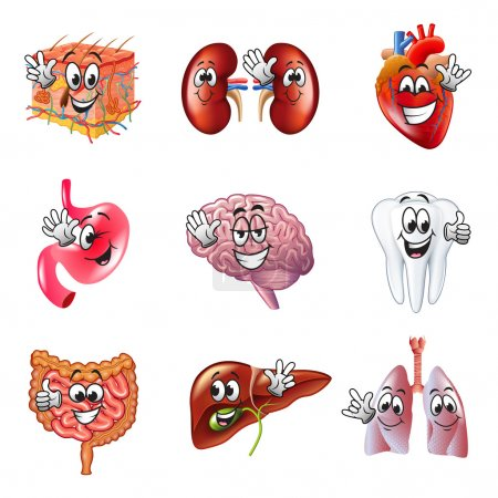 Illustration for Funny cartoon human organs detailed realistic vector set - Royalty Free Image