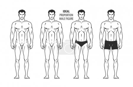 Ideal proportion, male figure. Hand-drawn outline man in full growth, human. Vector illustration