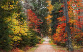 Picturesque and colorful autumn forest with a winding path. Golden autumn in the Estonian forest.