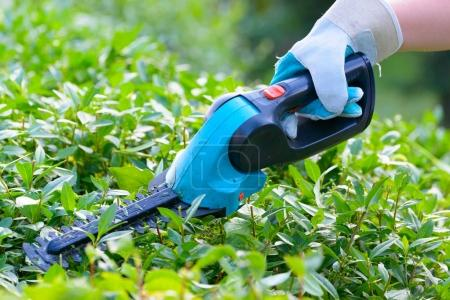 Hand with garden battery shears