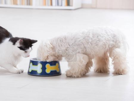 Dog and cat eating from a bowl