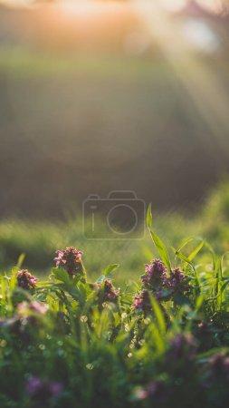 ZoranKomparPhotography
