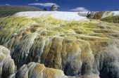 Hymen Terrace, Mammoth Hot Springs, Yellowstone National Park, USA, North America