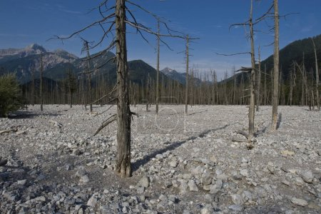Dead forest, Friedergries, Garmisch-Partenkirchen, Bavaria, Germany, Europe