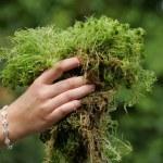 Female hand touching moss, Sphagnum Sphagnum spec...