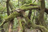 Laurel forest National park Garajonay La Gomera Canary Islands