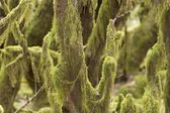 Moss in laurel forest National park Garajonay La Gomera Canary Islands
