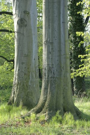 Photo for Cropped image of trees in green forest at summer season - Royalty Free Image