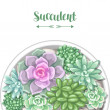 Card with various succulents in pot. Echeveria, Ja...