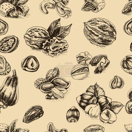 background sketch walnuts