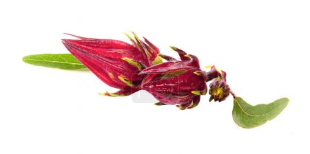 Roselle fruits, isolated on white