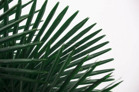 green palm leaves in art concept for interior wallpaper design