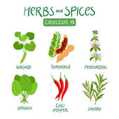Herbs and spices collection 13