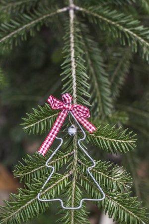 Christmas tree shape on pine tree.