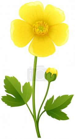 Buttercup flower in yellow color