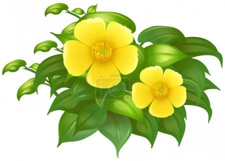 Yellow flowers in green bush