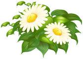 White daisy flowers in green bush