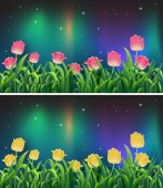 Scenes with pink and yellow tulip flowers at night